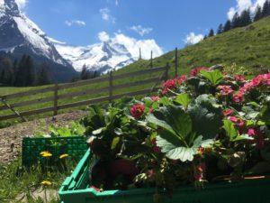 Read more about the article Gartenstart auf der Furrenweid