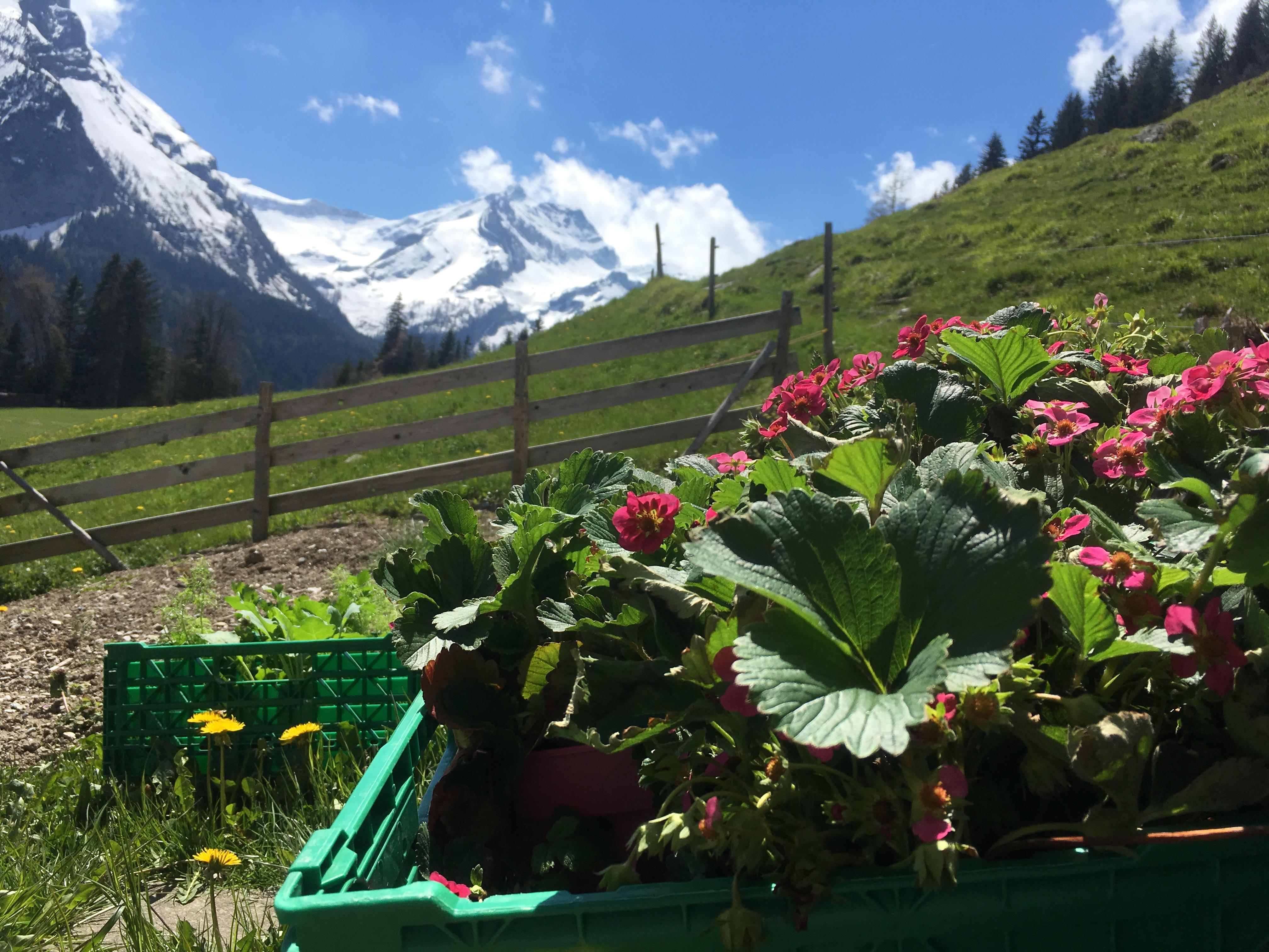 Gartenstart auf der Furrenweid