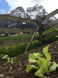 Echter Bergsalat, inklusive Aussicht!