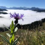 Gipfelraten hoch über dem Nebelmeer