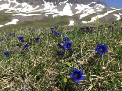 Sanetsch-Bergfrühling